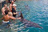 Bapor Kibra, Curacao, Netherlands Antilles