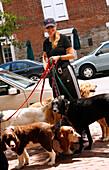 Dogwalker, Alexandria, Virginia, United States