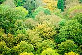 Deciduous trees, Saxony, Germany