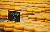 Alkmaar, cheesemarket, Netherlands, Europe