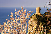 Mallorca, historic lookout tower at the west coast, Mirador  Ses Animes, almond blossom