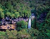 New Zealand, Mount Egmond national park, north island, Dawson falls