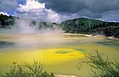 New Zealand, north island, near rotorua, Waiotapu thermal area, chamgane pools, thermal lake