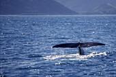 south island Kaikoura Marlborough  whale watching