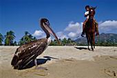 Pelican on the beach, boy riding horse in the background, Pie de la Cuesta, near Acapulco, Mexico, America