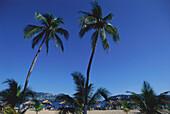 Beach with palm trees, Playa Condesa, Acapulco, Mexico, America