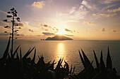Agaves, view to Capri from Punta Campanella, Campania, Italy