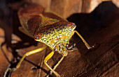 Bug, Brenta range, Trentino, Italy