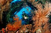 Scuba diver examines ship wreck Liberty, Bali, Tulamben, Indian Ocean, Indonesia