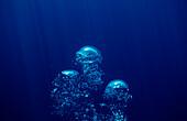 air bubbles rising underwater, Mexico, Sea of Cortez, Baja California, La Paz