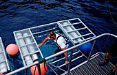Diver climbs in Shark cage, Mexico, Pacific ocean, Guadalupe