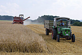 Harvester and tractor in field during grain harvest, Haunetal, Rhoen, Hesse, Germany