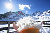 Decorated ski helmet, Lazaun mountain station, Schnals Valley, South Tyrol, Italy, MR
