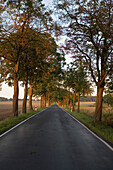 An avenue, tree lined road near Merkers, Rhoen, Thuringia, Germany