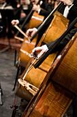 Men playing contrabass, Munich Symphony Orchestra, Prinzregententheater, Munich, Bavaria, Germany