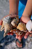 Collecting shells, Sanibel Island, Lighthouse Beach, Fort Myers, Florida, USA