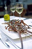 Florida spiny lobster (Panulirus argus), Restaurant Mark's South Beach, South Beach, Miami, Florida, USA