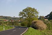 Country road in springtime, near Huenfeld Haselstein, Rhoen, Hesse, Germany