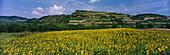 Single Vineyard Ihringer Winklerberg, Ihringen, Kaiserstuhl, Baden, Germany