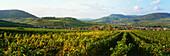 Vineyards close to village Birkweiler, Rheinpfalz, Germany