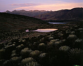 Lake with typical paramo vegetation high in the mountains, National Park, ca 4200m above sea level, Sierra Nevada, Venezuela, America
