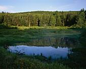 Waldsee Green Mountains, New England, Vermont, USA, America