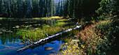 View of Siesta Lake, Yosemite National Park, California, USA, America