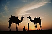 Desert dwellers with camels, Sahara, Africa