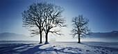 Winter scenery at Lake Kochel, Kochel, Bavaria, Germany
