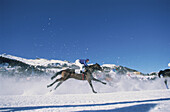 Horse race, horse with jockey galopping in the snow, St. Moritz, Grisons, Switzerland, Europe