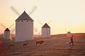 Farmer with animals against windmills, Campo de Criptana, Castile-La Mancha, Spain