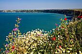 flowers at Cape Kaliakra, Black Sea, Bulgaria, Europe