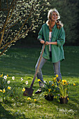 Yougn woman planting narcissus, Brannenburg, Upper Bavaria, Bavaria, Germany
