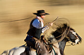 Cowboy riding and throwing lasso wildwest, Oregon USA