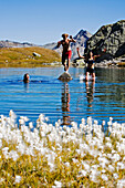 A young woman and two young men bathing, swimming in a mountain lake, cotton gras in the foreground, Laghi della Valletta, Gotthard Region, canton of Tessin, Ticino, Switzerland