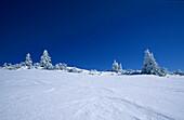 wind erosion in snow with deeply snow-covered fir trees, Fellhorn, Chiemgau range, Chiemgau, Upper Bavaria, Bavaria, Germany