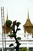 Gardener in Bangkok, Temple, Thailand, Asia