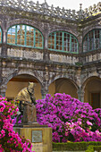 Azaleas in spring outside Colegio de Fonseca, Santiago de Compostela, Galicia, Spain