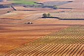 Vineyards in a wine growing landscape in spring, la Rioja, Spain
