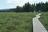 Torfhaus, walking track, boardwalk across moor landscape, Harz Mountains, Lower Saxony, northern Germany