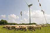 Sheeps grazing on hill Kronsberg near wind turbine, Hanover, Lower Saxony, Germany