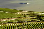 View over vineyard to river Rhine with excursion boat, Rudesheim, Rheingau, Hesse, Germany