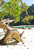 Driftwood on the beach at Surin Islands Marine National Park. headquarters Ko Surin, Phang Nga, Thailand