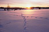 Winterlandschaft über die Hochebene, Rachel Gipfel am Horizont, Filipova Hütte, Sumava, Böhmerwald, Tschechien