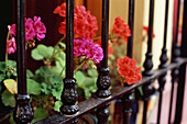 Iron barred window with geraniums in Nijar, Almeria province, Andalusia, Spain