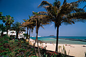 City Beach with palm trees, Lobos Island in the Background, Corralejo, Fuerteventura, Canary Islands, Spain