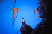 A woman is taking a picture of a  jelly fish in the New England Aquarium, Boston, Boston, Massachusetts, USA, ,USA