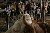 Boys in the barn, cows, hay, Walchstadt, Upper Bavaria, Germany