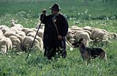 Shepherd and dog at sheepdog herding competition, Bad Urach, Swabian Alb's, Baden-Wuerttemberg, Germany