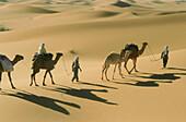 Karawane, Menschen und Kamele gehen durch den Sand, Grand Erg Occidental, Sahara, Algerien, Afrika